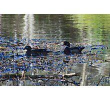 Wood Ducks Photographic Print
