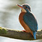 Kingfisher - II by Peter Wiggerman