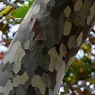 Unusual Bark by Lolabud