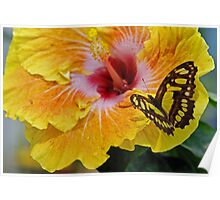 Butterflies are Flying Flowers  Poster