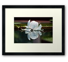 Lilly of the Water Framed Print