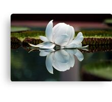 Lilly of the Water Canvas Print
