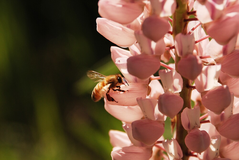 Bee 2 by AlisonOneL