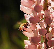 Bee 2 by AlisonOneL