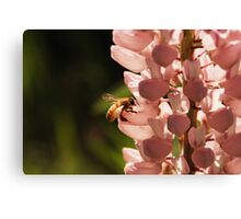 Bee 2 Canvas Print