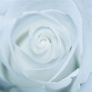 Pure White by Cheryl  Lunde