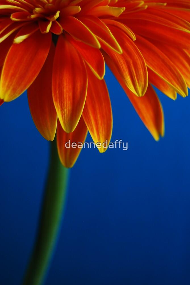 On Blue by deannedaffy