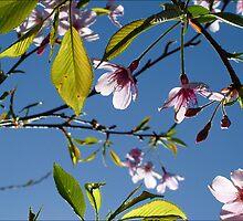 Blossoms by AlisonOneL