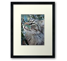 SOFT KITTY Framed Print