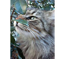 SOFT KITTY Photographic Print