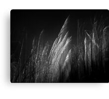 night sigh Canvas Print