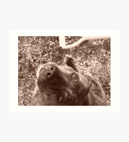 Staffie in sepia Art Print