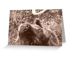 Staffie in sepia Greeting Card