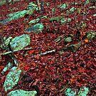 Emerald Native Path,  Kings Bluff Pedestal Rock, NW Arkansas. by NatureGreeting Cards ©ccwri
