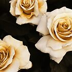 Antique Roses by AlisonOneL