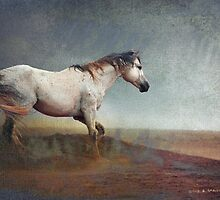 dust storm- white horse by R Christopher  Vest