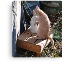 Kitten Playing with Tent Rope Canvas Print