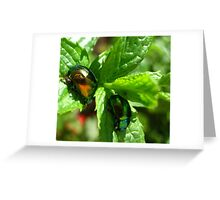 Shiny Beetles on Mint Leaves Greeting Card