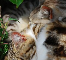 Two Cats Sleeping by jojobob