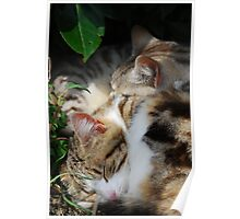 Two Cats Sleeping Poster