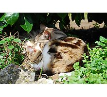 Two Cats Sleeping Photographic Print