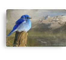 return to the high country mountain bluebird Canvas Print