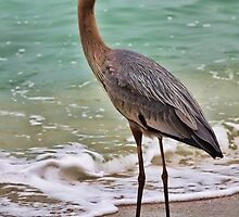 Great Blue Heron by T.J. Martin