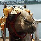 A chic camel by DeborahDinah