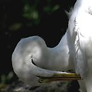 Preening by Anne Smyth