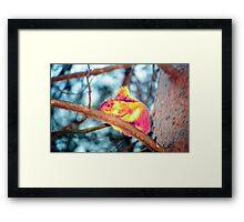 Psychedelic Squirrel Framed Print