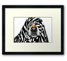 Guess Who! (Molly as zebra) Framed Print