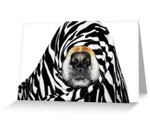Guess Who! (Molly as zebra) Greeting Card