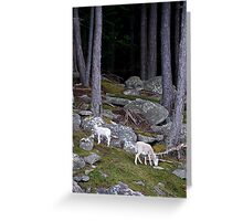 Residents of Curlew Island Greeting Card