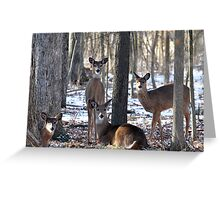 Herd of Deer Greeting Card