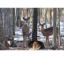 Herd of Deer Photographic Print
