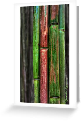 Rainforest Colours by Randy Jay Braun