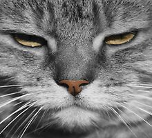 Mean Cat by simpsonvisuals