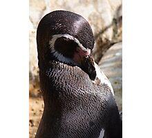 Sunkissed Penguin Photographic Print