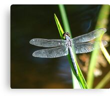 Dragonfly Complete Canvas Print