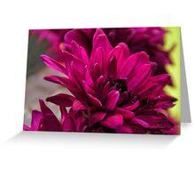 Chrysanthemum flower Greeting Card