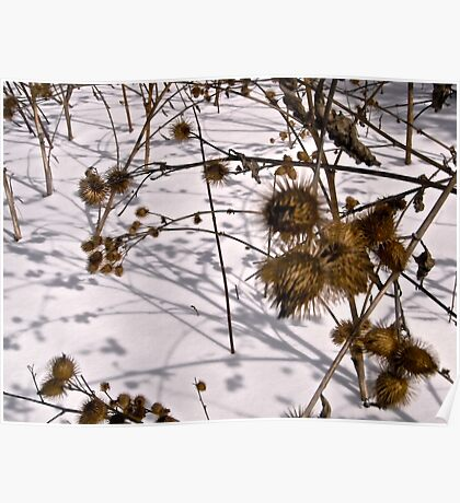 Burrs in the snow Poster