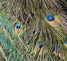 Peacock Feathers by pookiepouch
