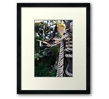 Tarzan's Tree House Framed Print