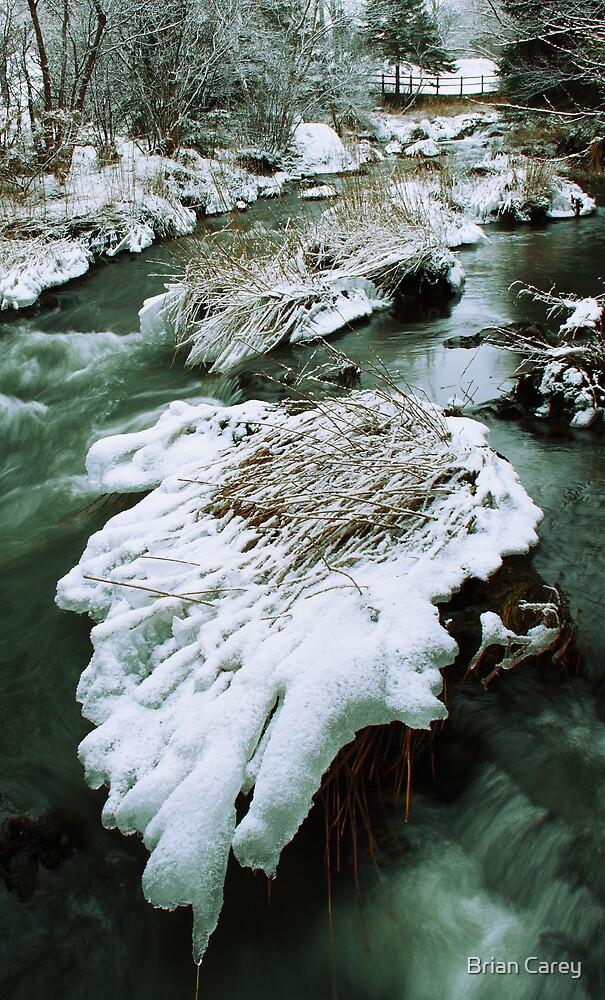 Frozen by Brian Carey