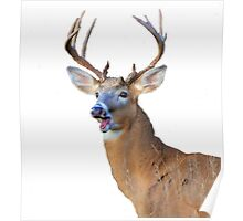 silly deer Poster