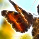 Gossamer Wings by tkrosevear