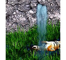 Tiger bath Photographic Print