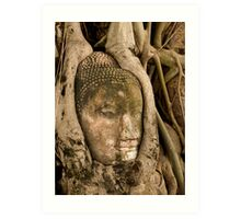 Budda Head in Roots Art Print