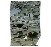 the lilly pads Poster