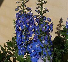 Blue Flowers by Sleeva